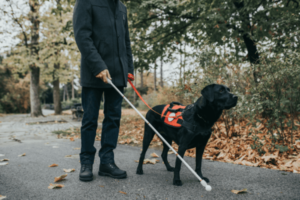 blind man walking with his guide dog